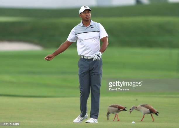 Tiger Woods of the United States waits to play a shot whilst the geese are oblivious to his presence during the proam for the 2018 Honda Classic on...