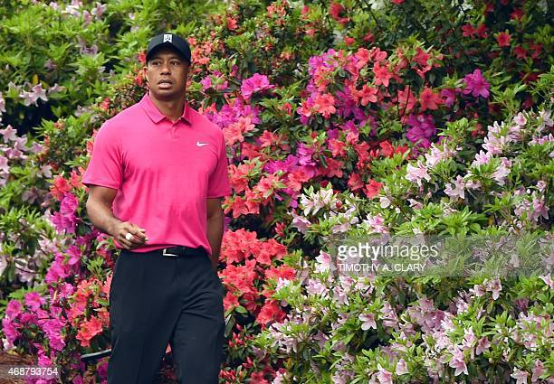 Tiger Woods of the US walks past blooming azaleas April 7 2015 at Augusta National Golf Club in Augusta Georgia during a practice round for the 2015...