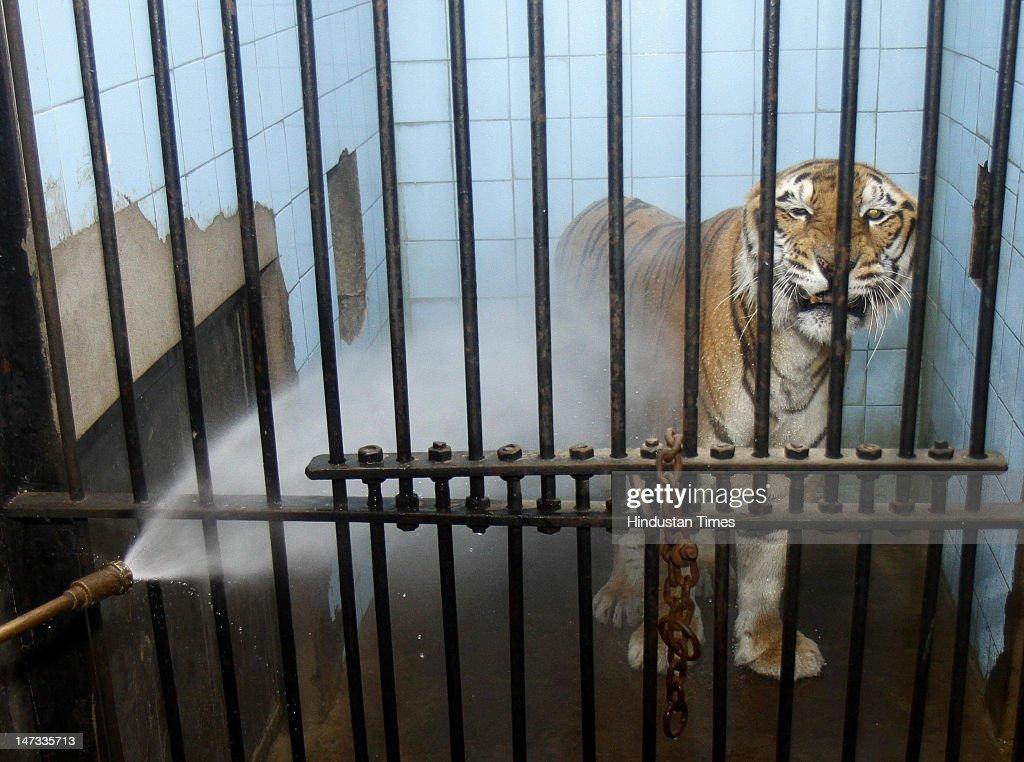New delhi zoo picture gallery