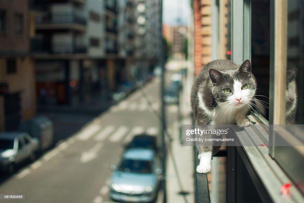 Tightrope walker cat : Stock Photo