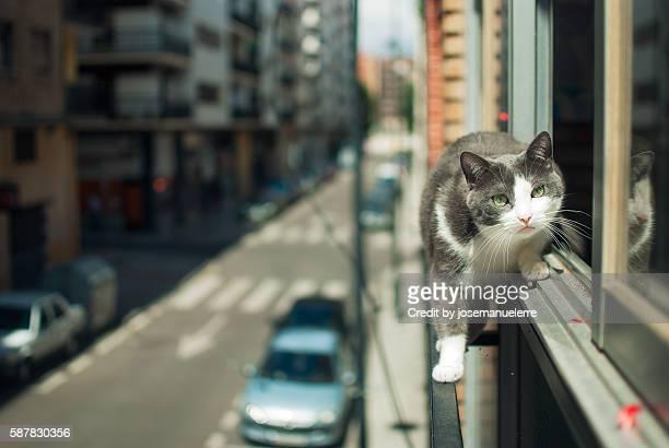 tightrope walker cat - josemanuelerre fotografías e imágenes de stock