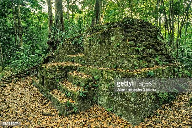 Tikal archaeological treasures in the rainforest.