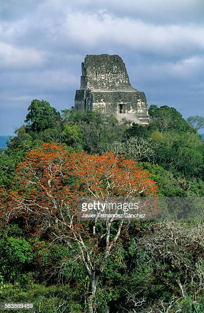 Tikal. The Mayan temple IV on the rainforest