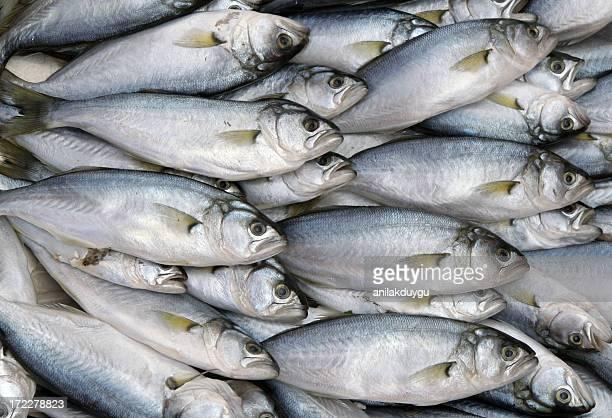 Carrelage de poissons - 2