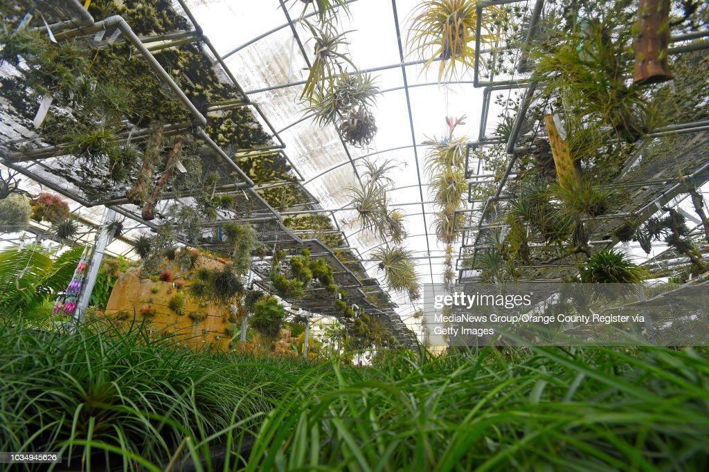 Tillandsia Plants Hang And Grow On Racks At Rainforest Flora