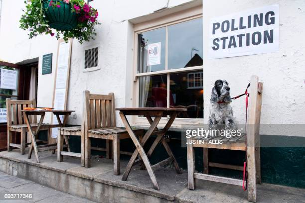 Tilly, a Cocker Spaniel dog, sits on a seat outside the Anglesea Arms pub, set up as a Polling Station, whilst her owner casts their ballot paper, in...