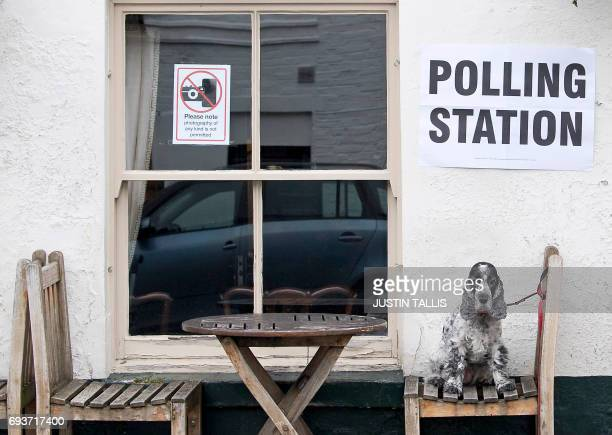 Tilly a Cocker Spaniel dog sits on a seat outside the Anglesea Arms pub set up as a Polling Station whilst her owner casts their ballot paper in...