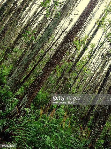 tilt image of trees growing in forest - lopez stock pictures, royalty-free photos & images