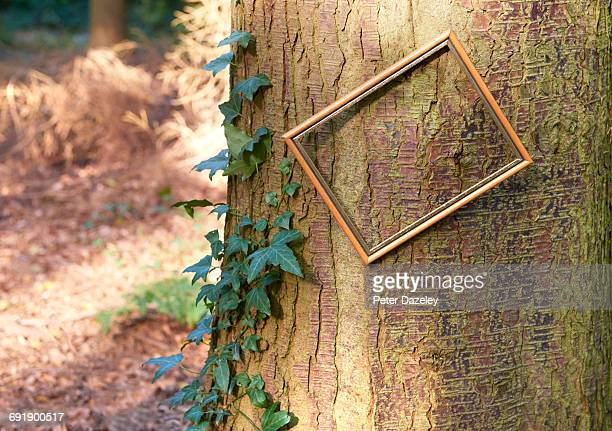 tilted picture frame on tree in clearing in wood - the slants stock pictures, royalty-free photos & images