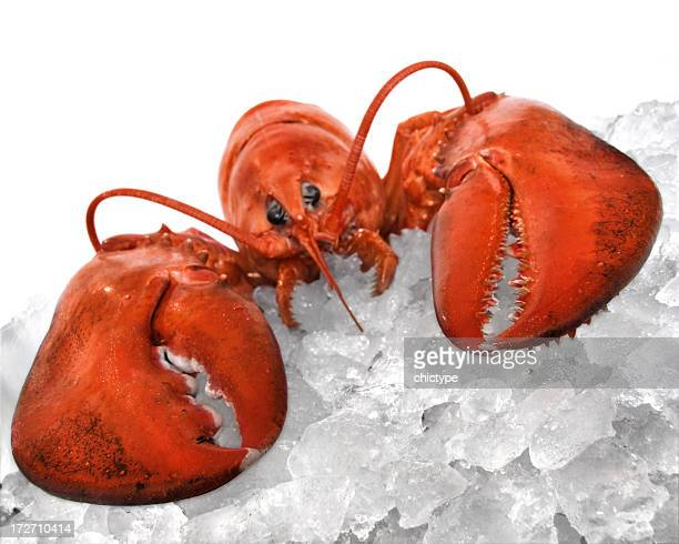 Tilted view of lobster lying on ice