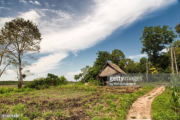 Tilting Amazon hut