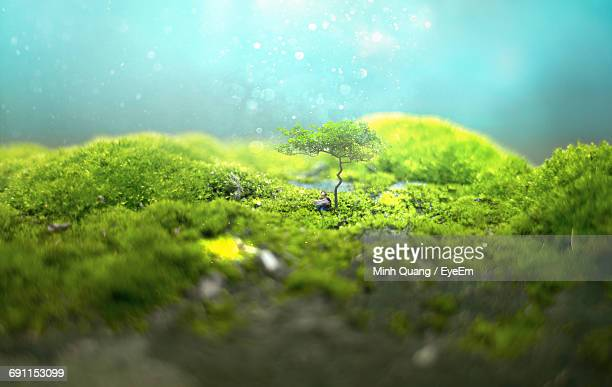 Tilt-Shift Image Of Person Reading Newspaper While Sitting Below Tree On Field