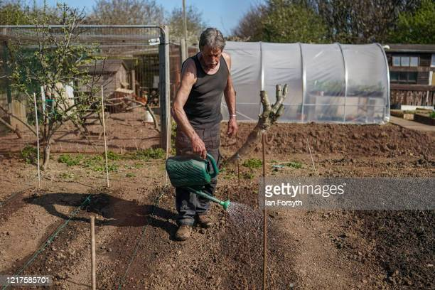 Tim Boffey waters his crop as he tends to his allotment and follows government guidelines on social distancing and time restrictions on April 08,...