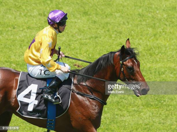 Tim Clark on Santos returns to scale after winning race 2 on Apollo Stakes Day at Royal Randwick Racecourse on February 17 2018 in Sydney Australia