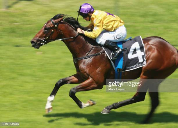 Tim Clark rides Santos to win race 2 on Apollo Stakes Day at Royal Randwick Racecourse on February 17 2018 in Sydney Australia