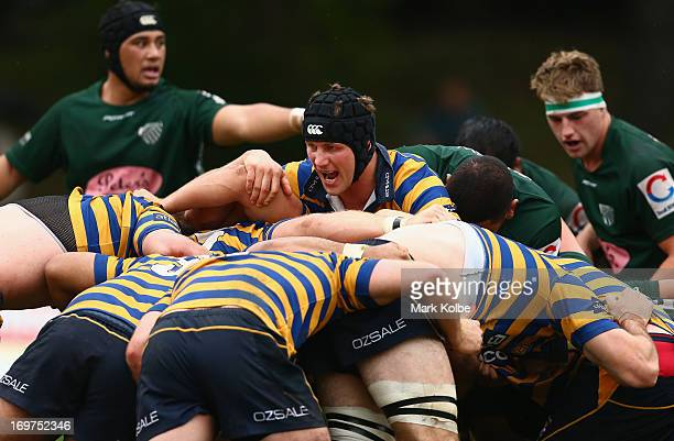 Tim Davidson of Sydney University shouts instructions during the round nine Shute Shield match between Sydney University and Randwick at University...