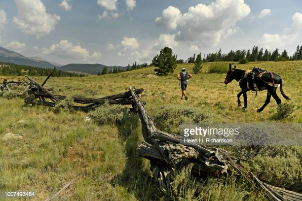 Tim Scaturro of Lakewood leads his donkey Charlie towards Mosquito Pass as the duo take part in the 70th annual World Championship Pack Burro Race on...