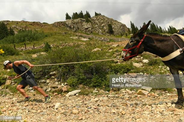 Tim Scaturro of Lakewood pulls hard to get his donkey Charlie to move as the two head up the rocky rock towards Mosquito Pass as they take part in...