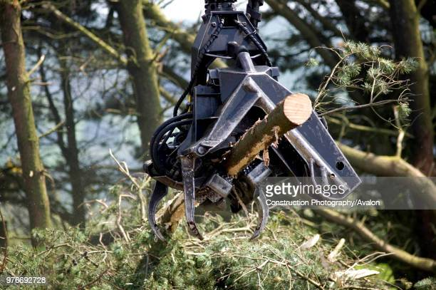 Timber Harvesting Carmarthenshire Forestry Dyfed Wales UK
