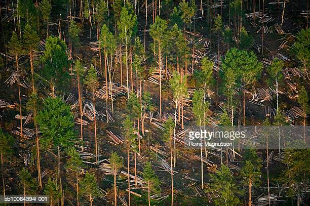 Timber logging, aerial view