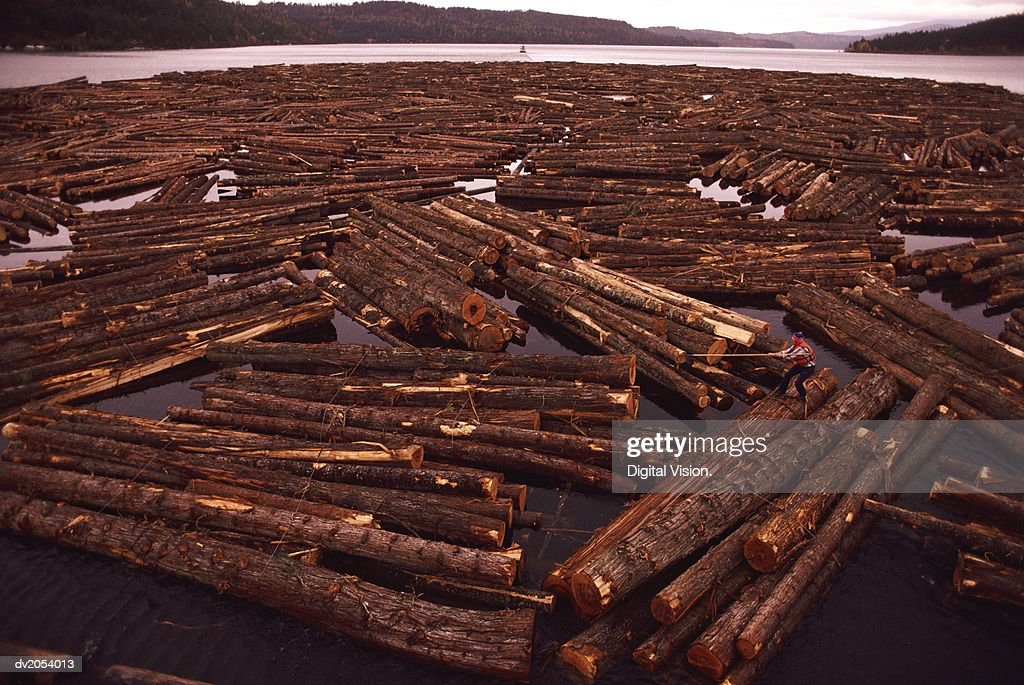 Timber Logs Floating on a Lake : Stock Photo