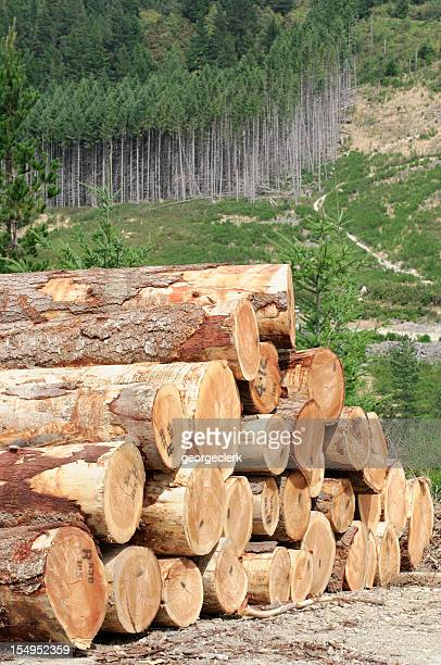 Timber Stack and Forest