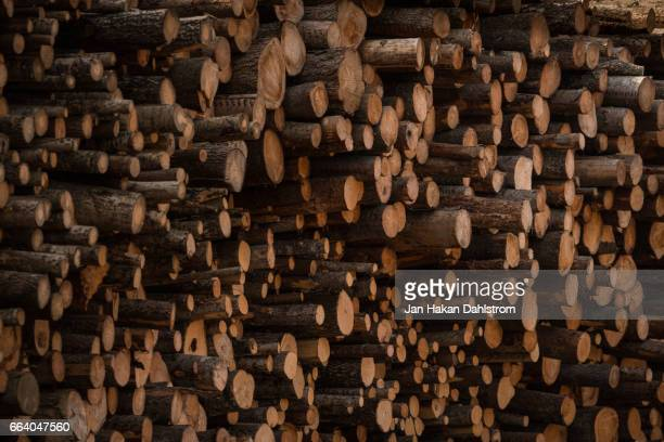 timber stack - firewood stock pictures, royalty-free photos & images