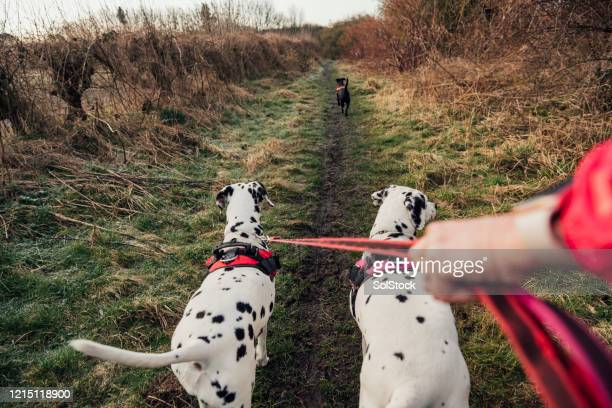 time for a walk - pet lead stock pictures, royalty-free photos & images