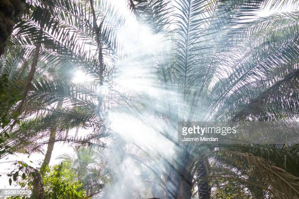 time for barbecue in beautiful garden - iraq stock pictures, royalty-free photos & images