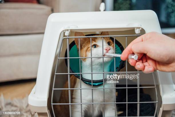 time for medicine - pet toy stock pictures, royalty-free photos & images
