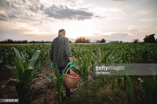 758 Sad Farmer Photos And Premium High Res Pictures Getty Images