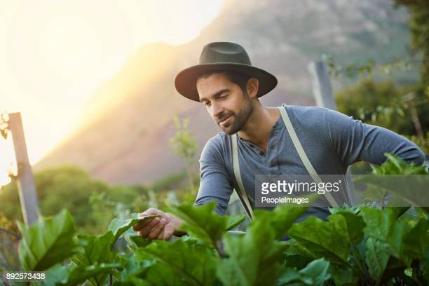 time spent in a garden is never wasted - agricultural occupation stock photos and pictures
