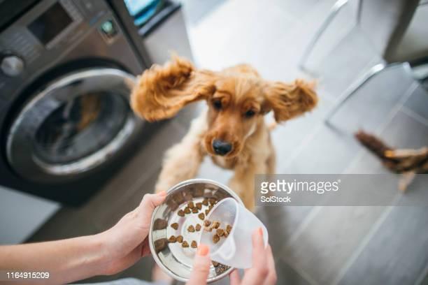 tiempo para alimentar al perro - alimentar fotografías e imágenes de stock