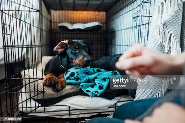 time to get up! - dog stock pictures, royalty-free photos & images