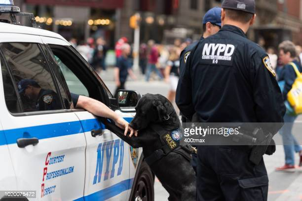 times square - new york city police department stock pictures, royalty-free photos & images