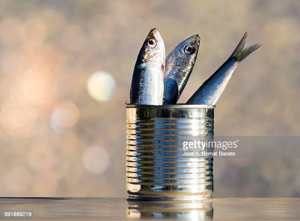 tin of conserve and fresh sardines - オキスズキ ストックフォトと画像