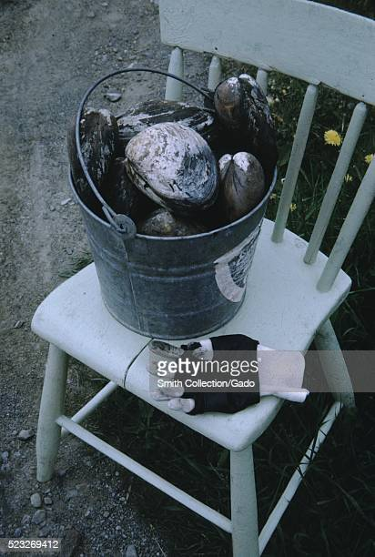 A tin pail full of shells set on top of a white wooden chair with a black and white working gloves beside it 1966