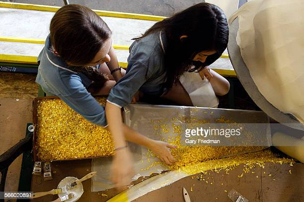 Tina Flanagan and Madi Gunther both 13 puts yellow strawflower seeds on the Kit–Cat 'Timeless Fun For Everyone' float at Fiesta Floats in Irwindale...