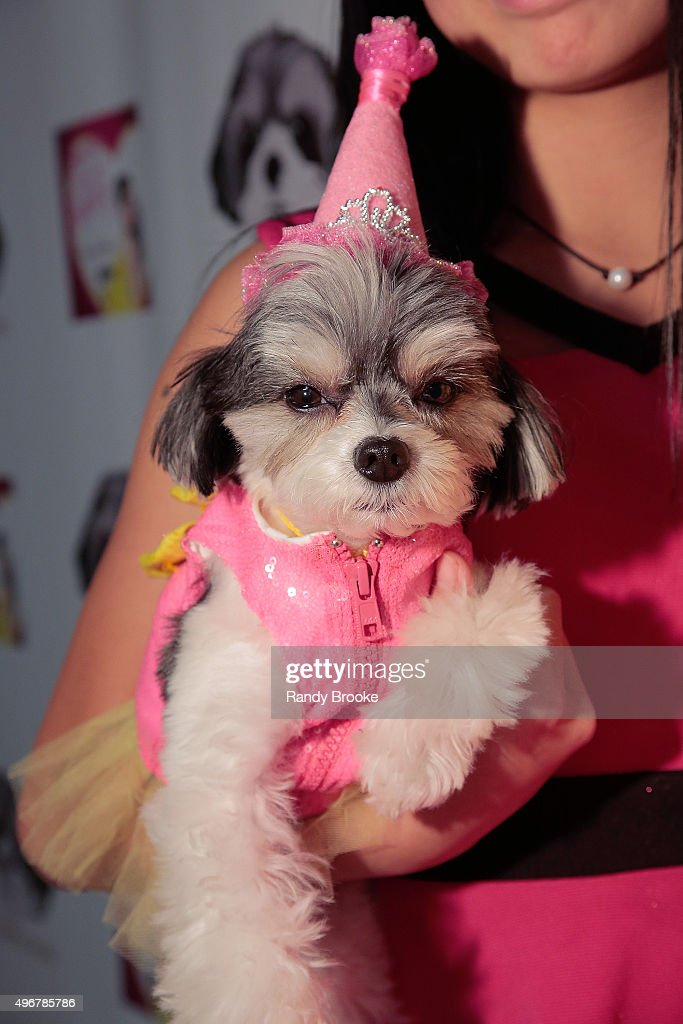 Tinkerbelle poses on her 4th birthday during the Andi Dorfman Celebrates Tinkerbelle The Dog's Birthday at Inglot Cosmetics on November 11, 2015 in New York City.
