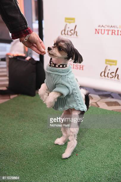 Tinkerbelle The Dog tries Rachael Ray's Nutrish DISH during the celebration of the launch of Rachael Ray's Nutrish DISH with a Puppy Party on...