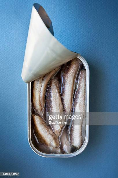tinned sardines - canned food stock pictures, royalty-free photos & images