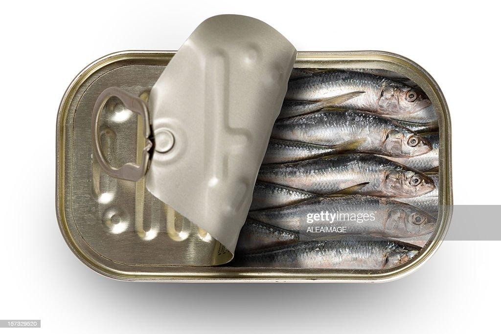 Tinned sardines : Stock Photo