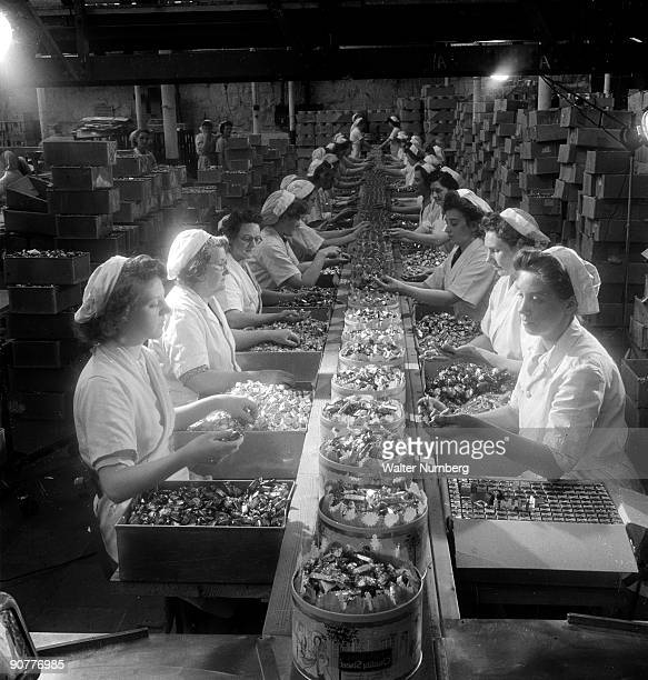 Tins of Quality Street chocolates are filled by a team of women workers on a conveyor belt at Mackintoshs confectionary factory in Halifax Photograph...