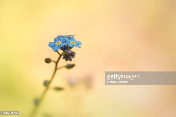 Tiny Beauty