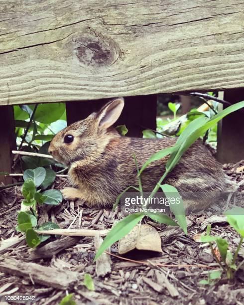 tiny brown rabbit in the wild - coniglietto foto e immagini stock