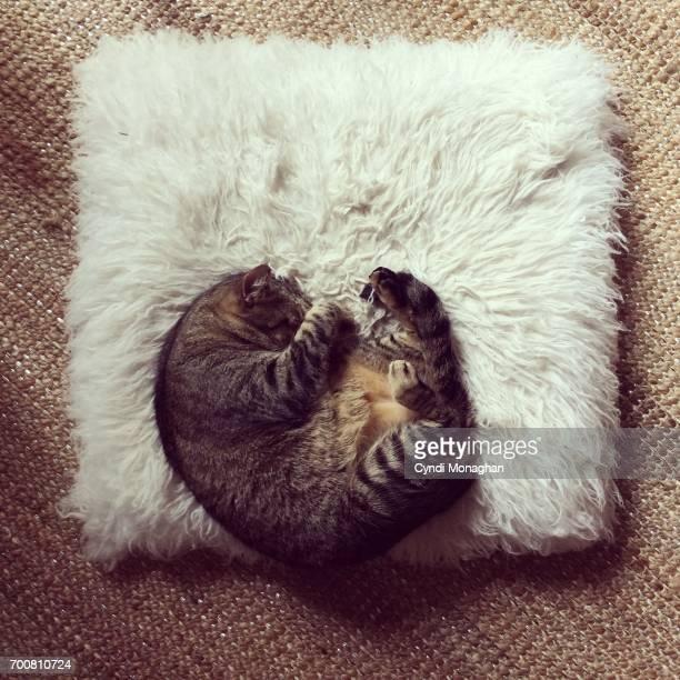 Tiny Cat Asleep