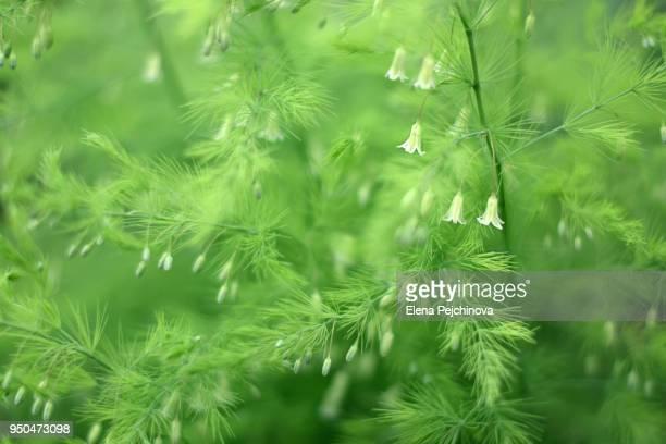 tiny flower bells - elena blume stock-fotos und bilder