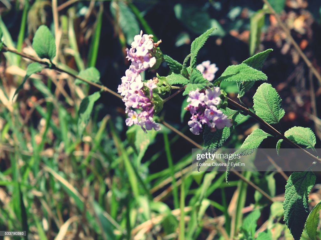 Tiny Flowers Blooming On Field On Sunny Day : Foto stock