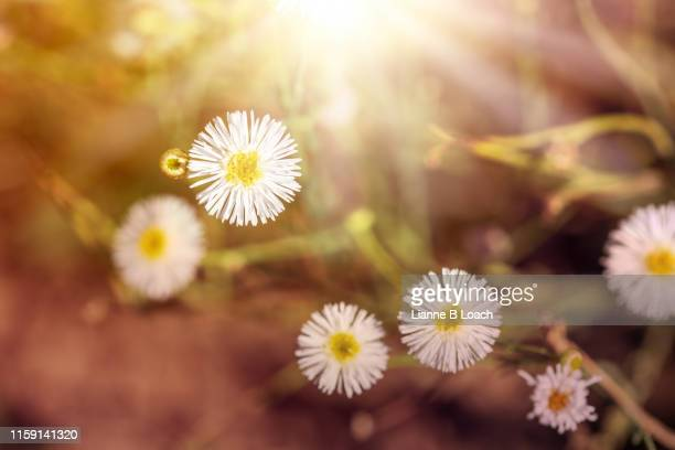 tiny  flowers - lianne loach stock pictures, royalty-free photos & images
