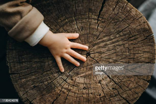 tiny hand of a toddler touching the texture of old tree trunk in the nature - naturwald stock-fotos und bilder